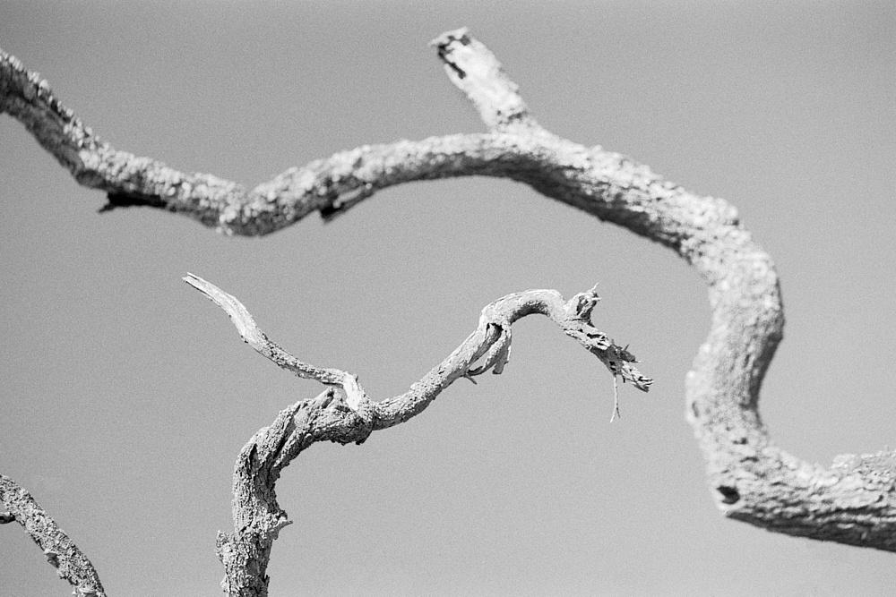 2018-09-16-1970-trees.jpg