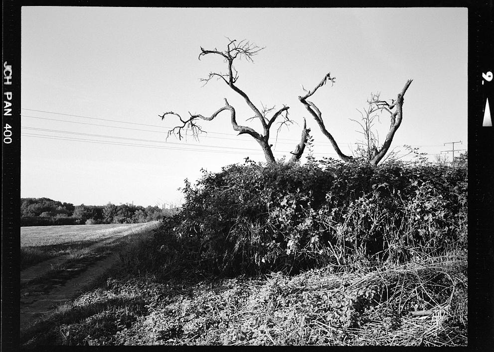 2018-10-01-1997-jch framed trees.jpg