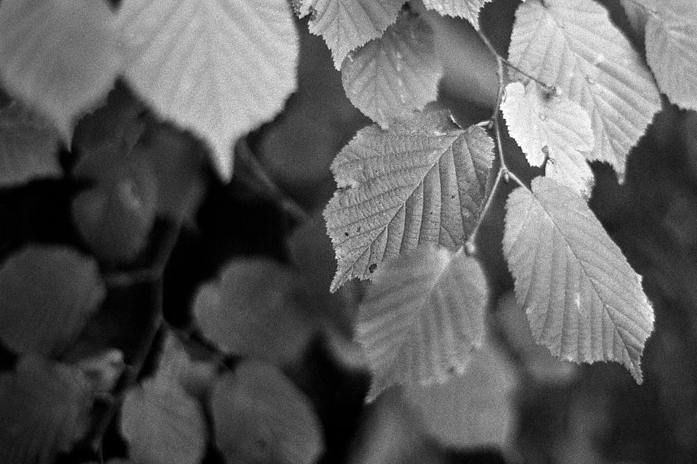 2018-10-13-2011-leaf.jpg