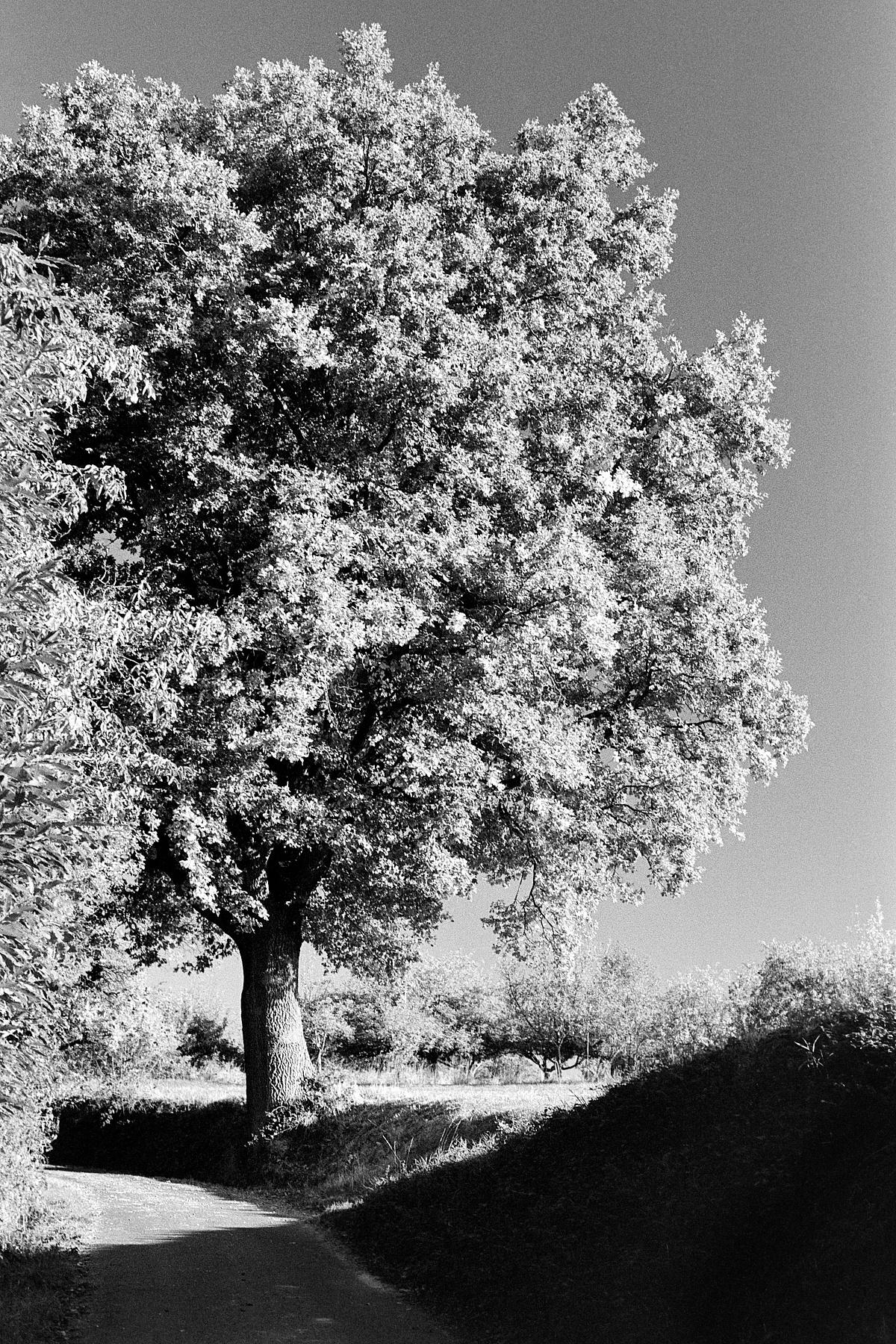 2018-10-19-2023-tree cinestill bwxx.jpg