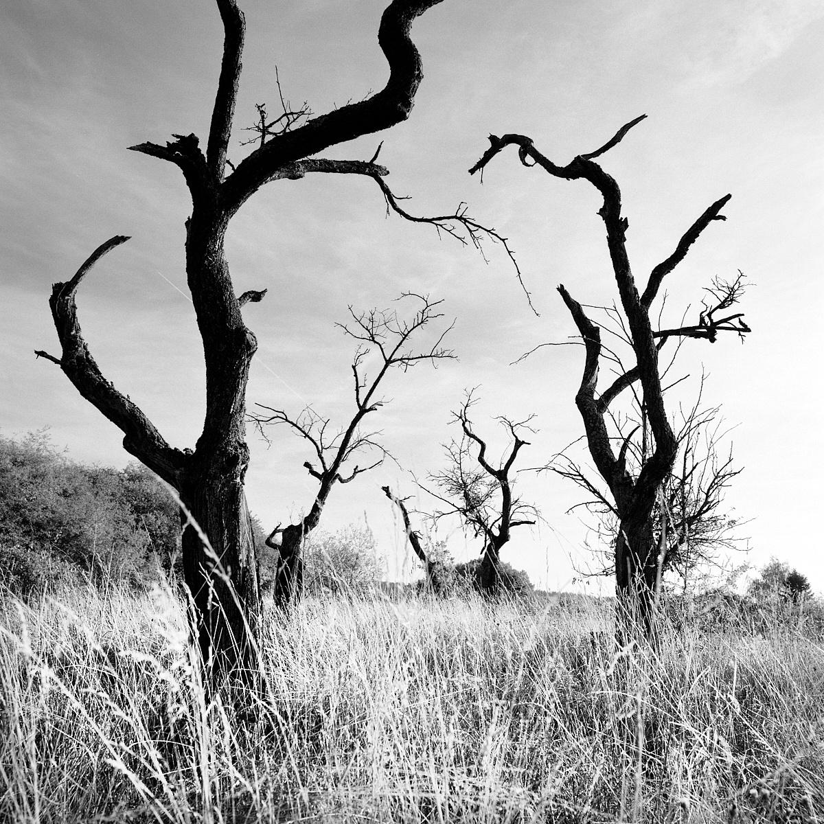 2018-10-31-2148-trees.jpg