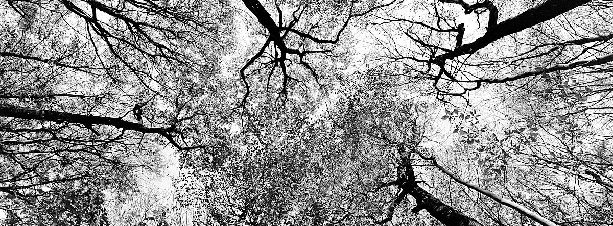 2018-11-26-2177-woods xpan.jpg