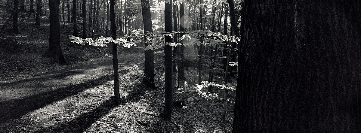 2018-11-26-2178-woods xpan.jpg