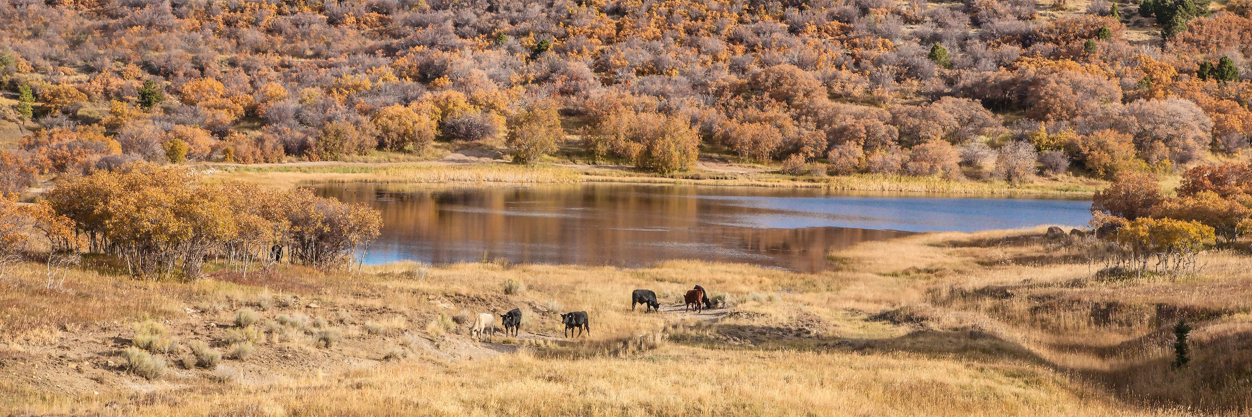 Watering hole Bears Ears Country