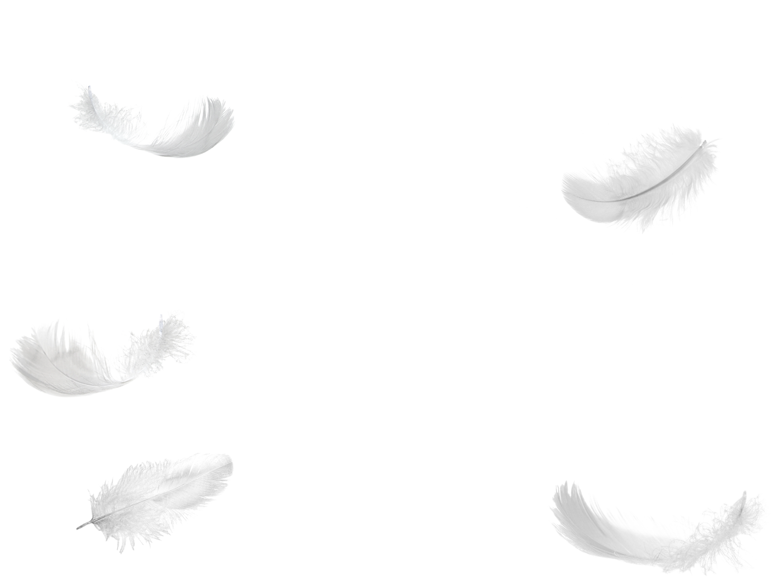 1495816576five-feathers-falling-no-background-png.png