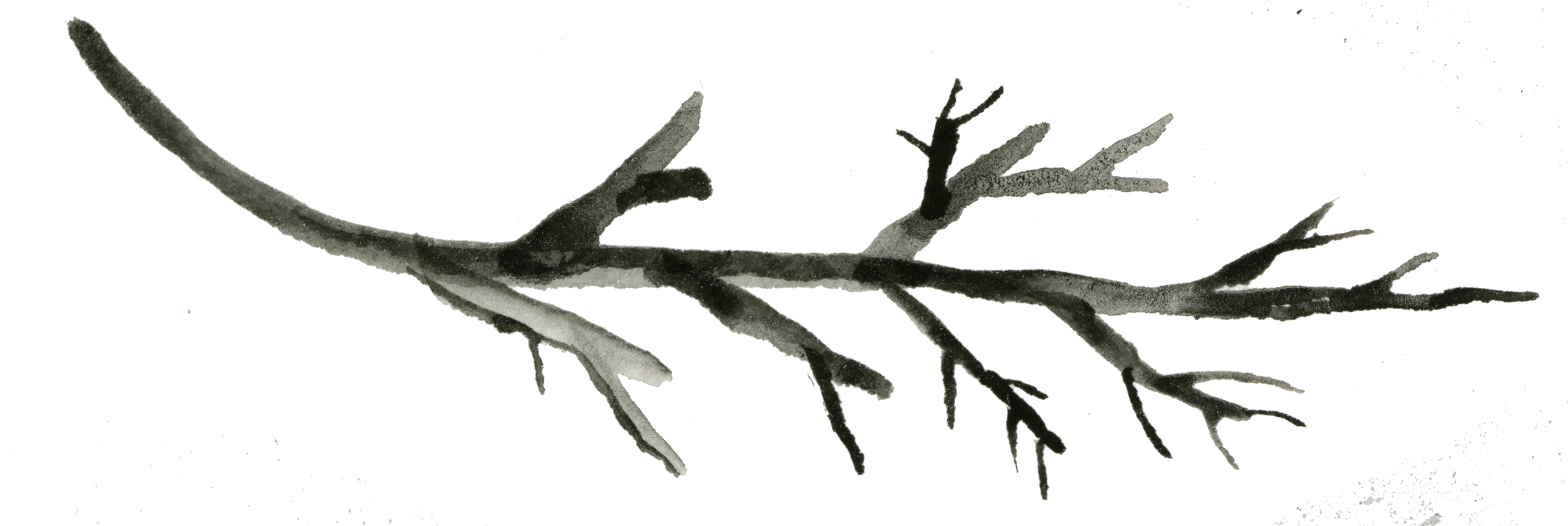 watercolor black branch.png