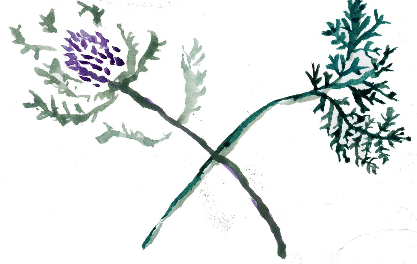 thistle paint2.png