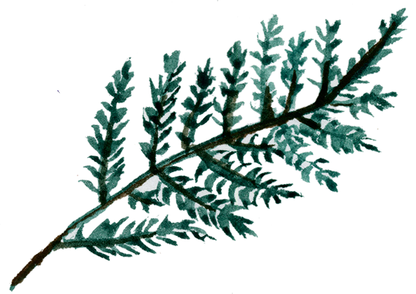 green branch.png