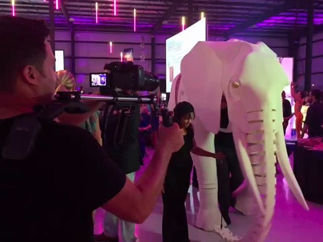 Had a great time capturing the motion at this colorful, exciting, impactful event!  #journeyinmotion2019 @limamemorialfoundation #fundraisingevent #rehab #greatcause #videoproduction #puppets #elephant #camera #shapewlb #motion #videobranch