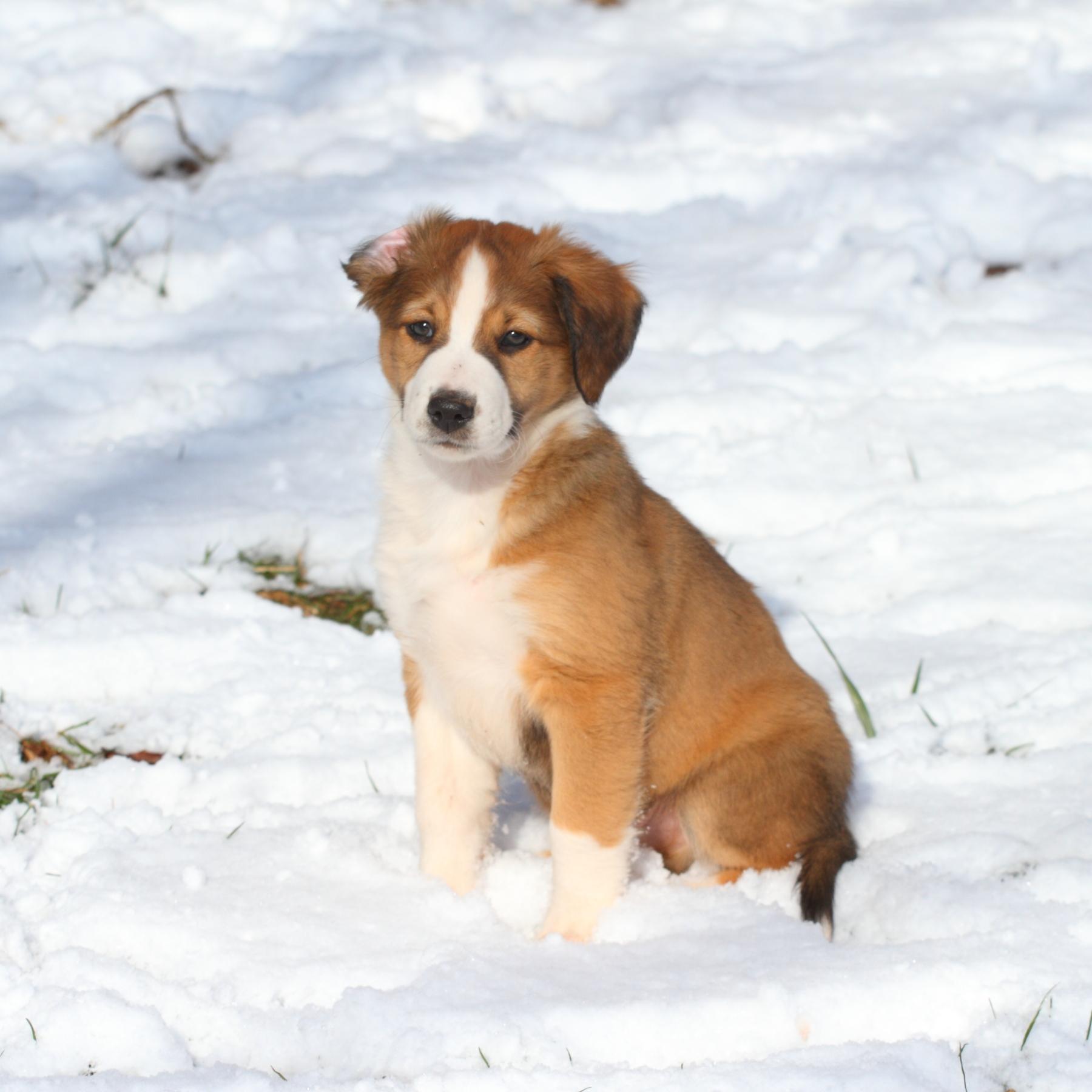 Puppy Boy #1