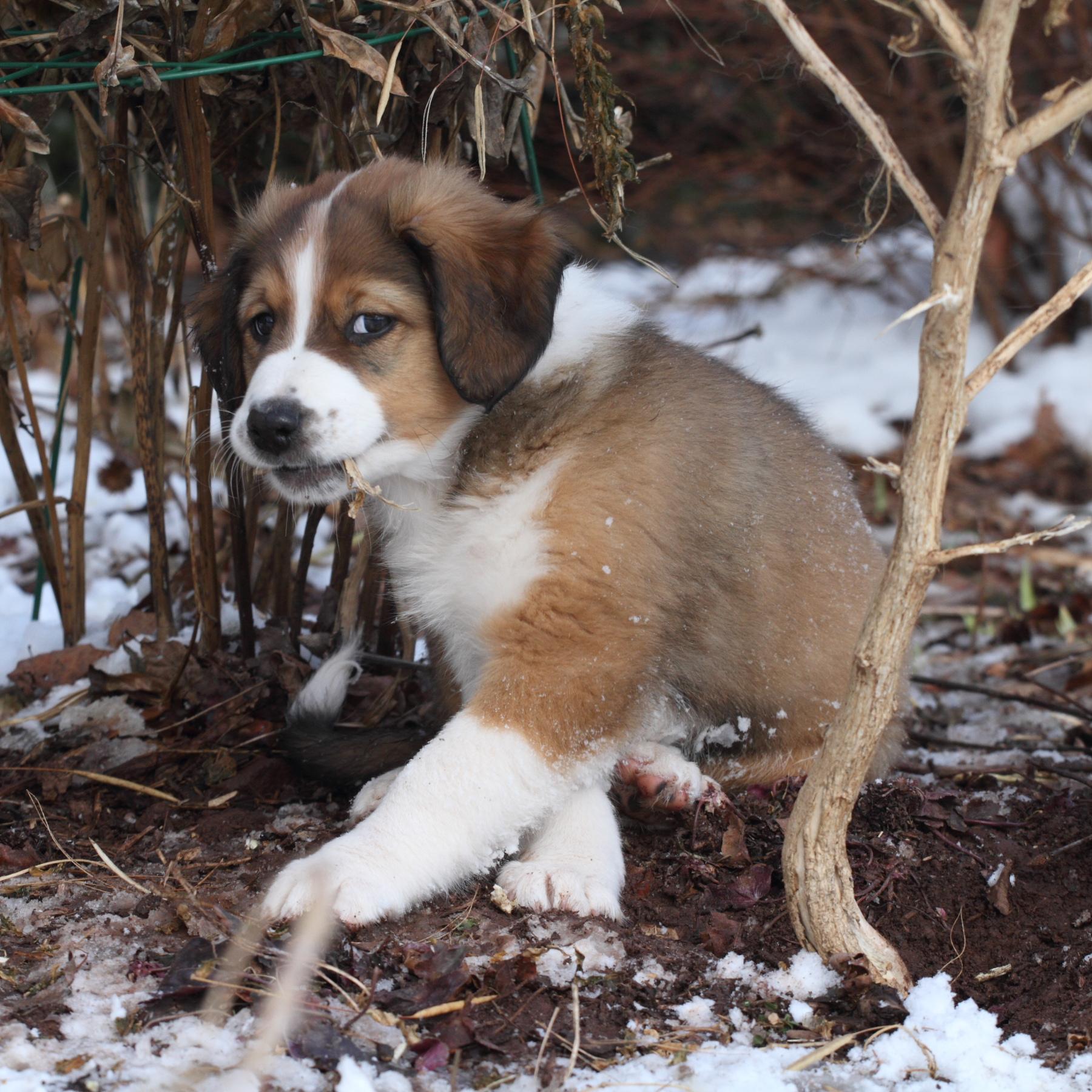 Puppy Boy #2