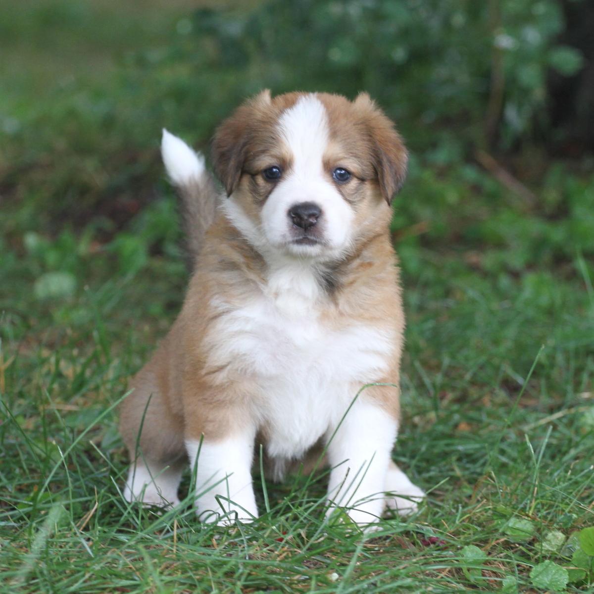 Masie_Puppies45.JPG