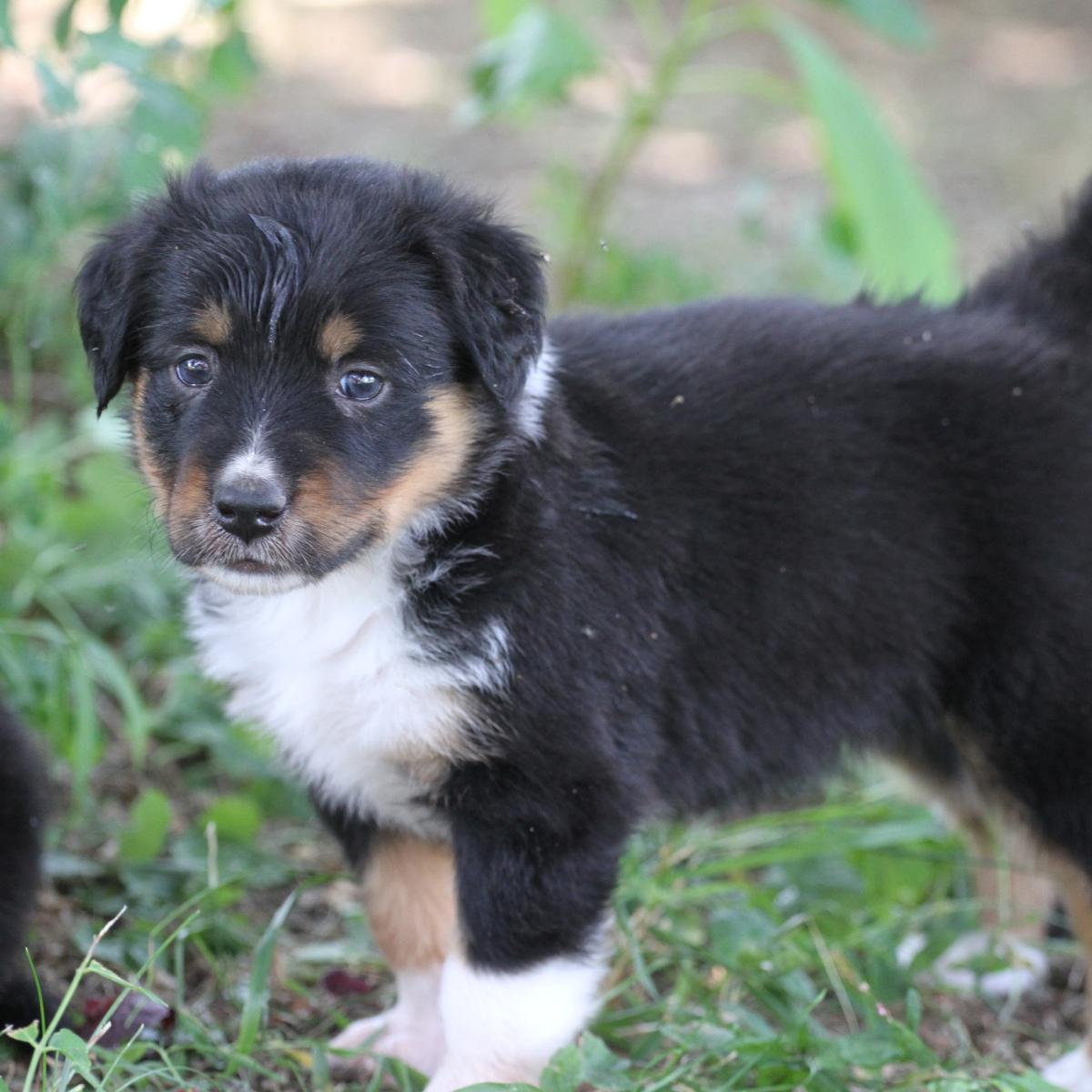Masie_Puppies24.JPG