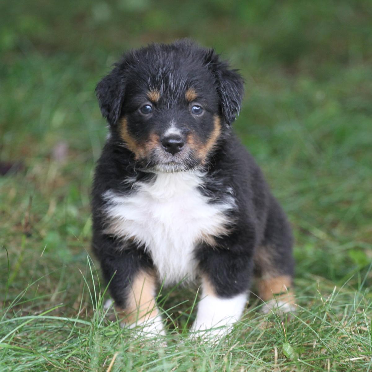 Masie_Puppies44.JPG
