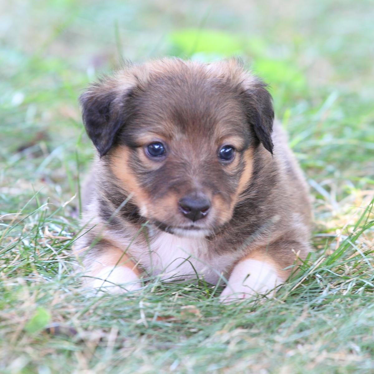 Masie_Puppies6.JPG