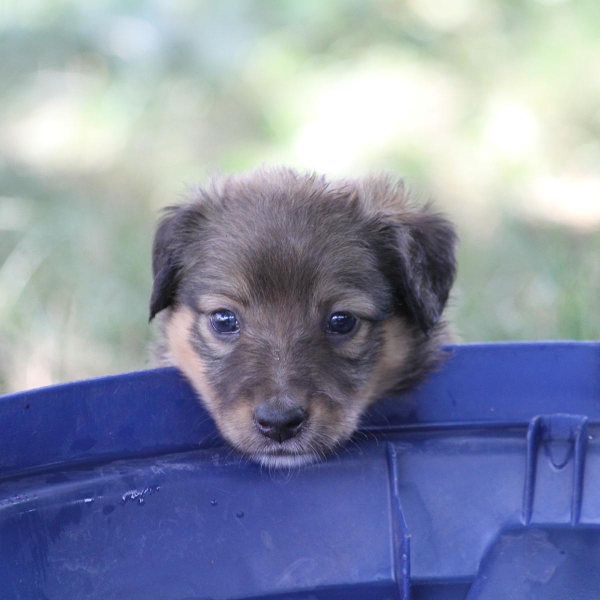 Masie_Puppies22.JPG