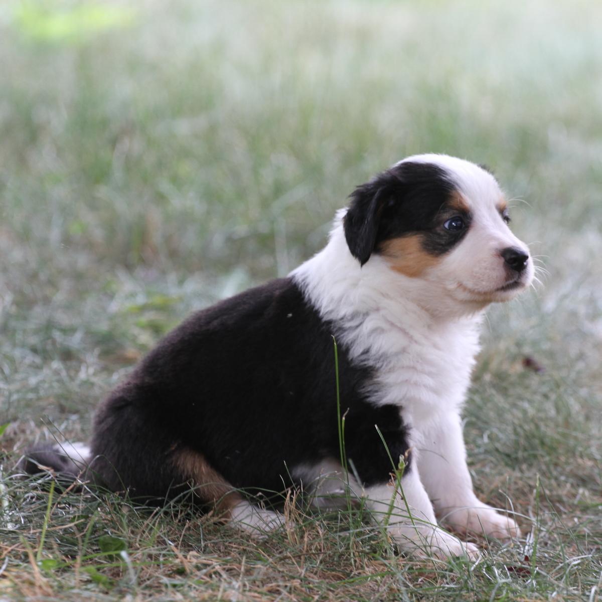 Masie_Puppies31.JPG