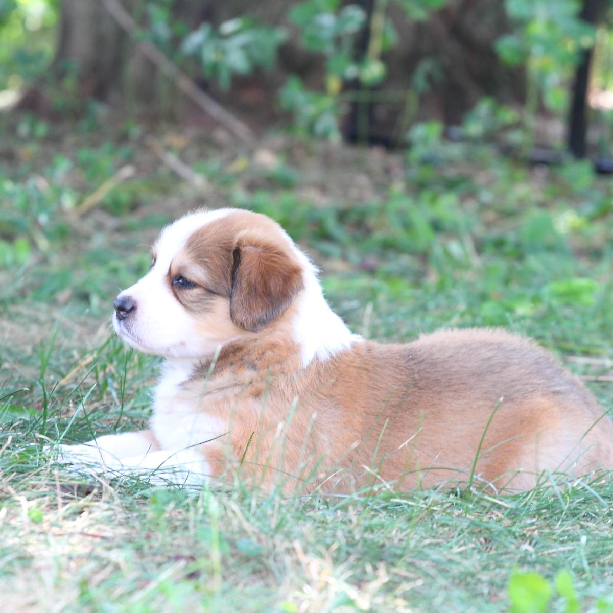 Masie_Puppies5.JPG