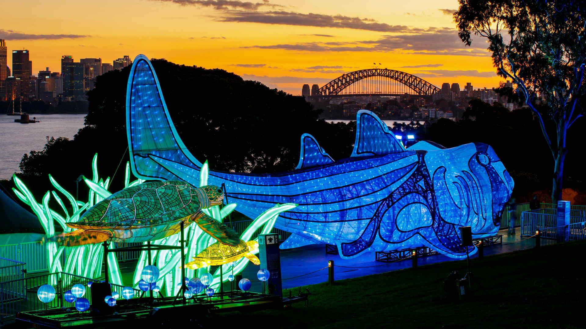 vivid-sydney-2017-taronga-zoo-port-jackson-shark-destination-NSW-james-horan.jpg