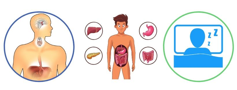 Hormones, nutrition and health -