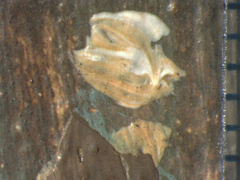 Hoofd figuurtje na verwijdering overschildering