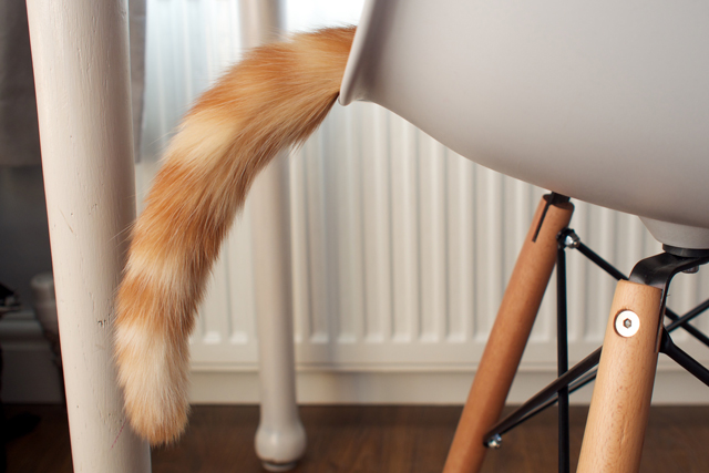 this-week-bert's-tail