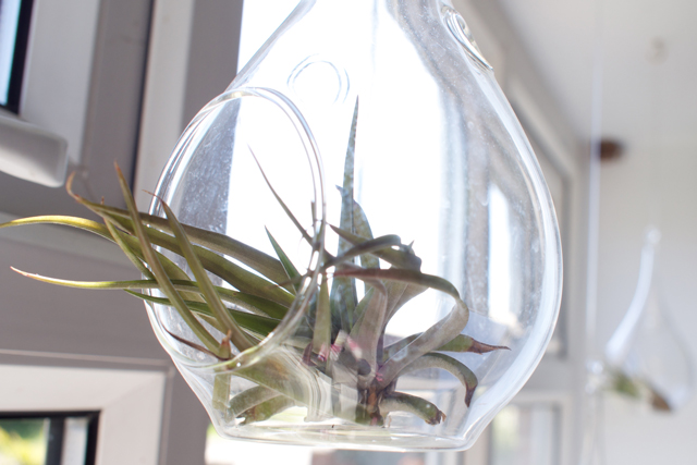 librarian-housplants-airplants1