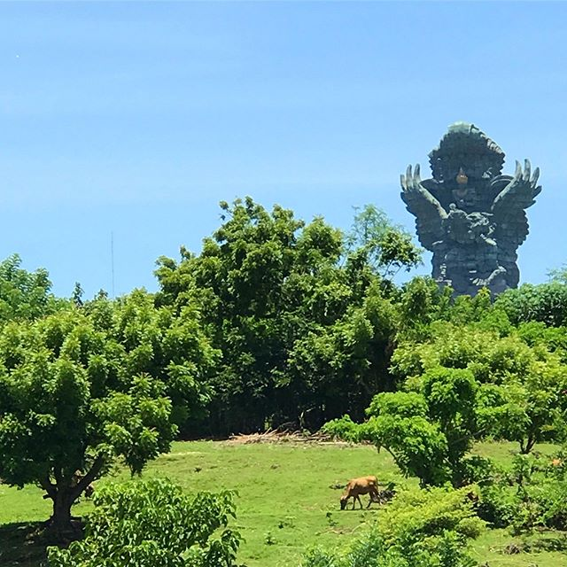 "Not a ""good"" photo by any means - and it's heavily cropped from an iPhone - but thought the statue overlooking the cows was interesting.  #Bali #indonesia"