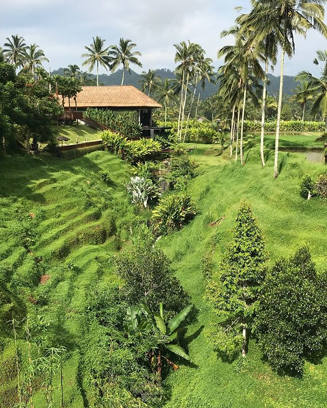 Secret Garden Village, Bedugul #Bali