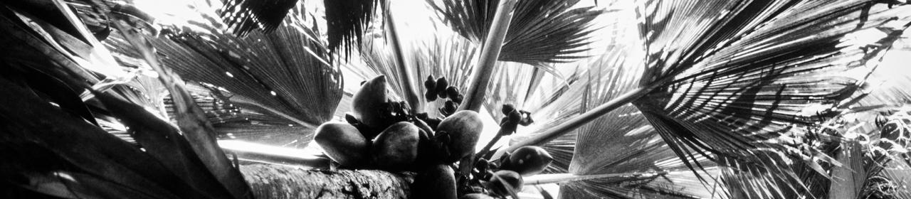 _BW_Coconuts.jpg
