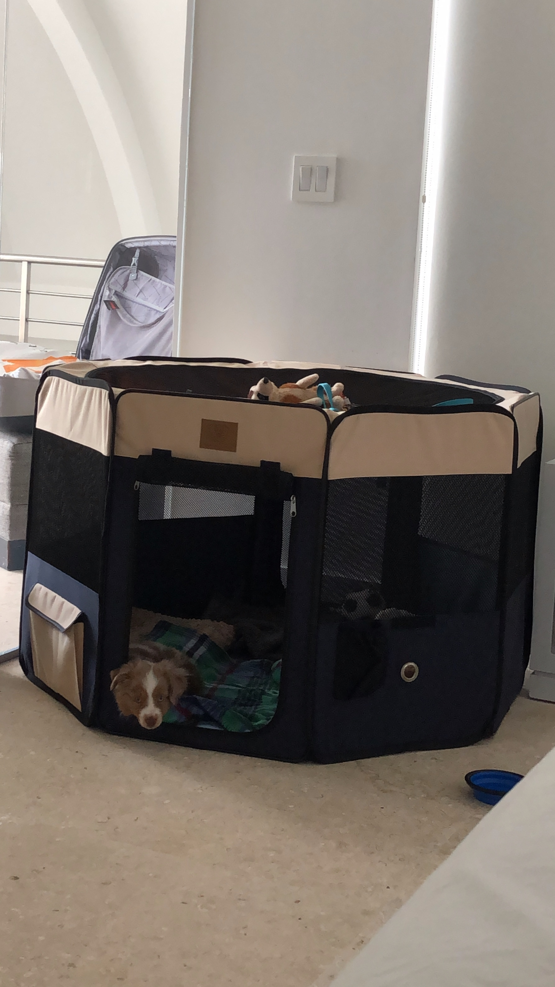 This is the playpen I bought him. We weren't successful with him in terms of separation anxiety training. But it is a good training tool when you are in the room to teach him how to be OK playing on his own. Click on the image to find it at Amazon.