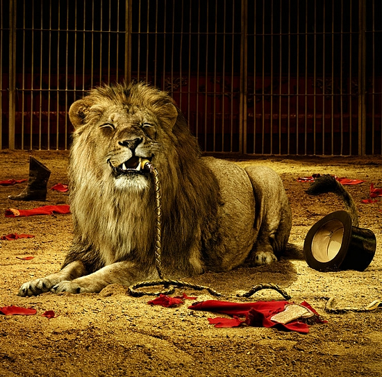 lion-in-cage.jpg