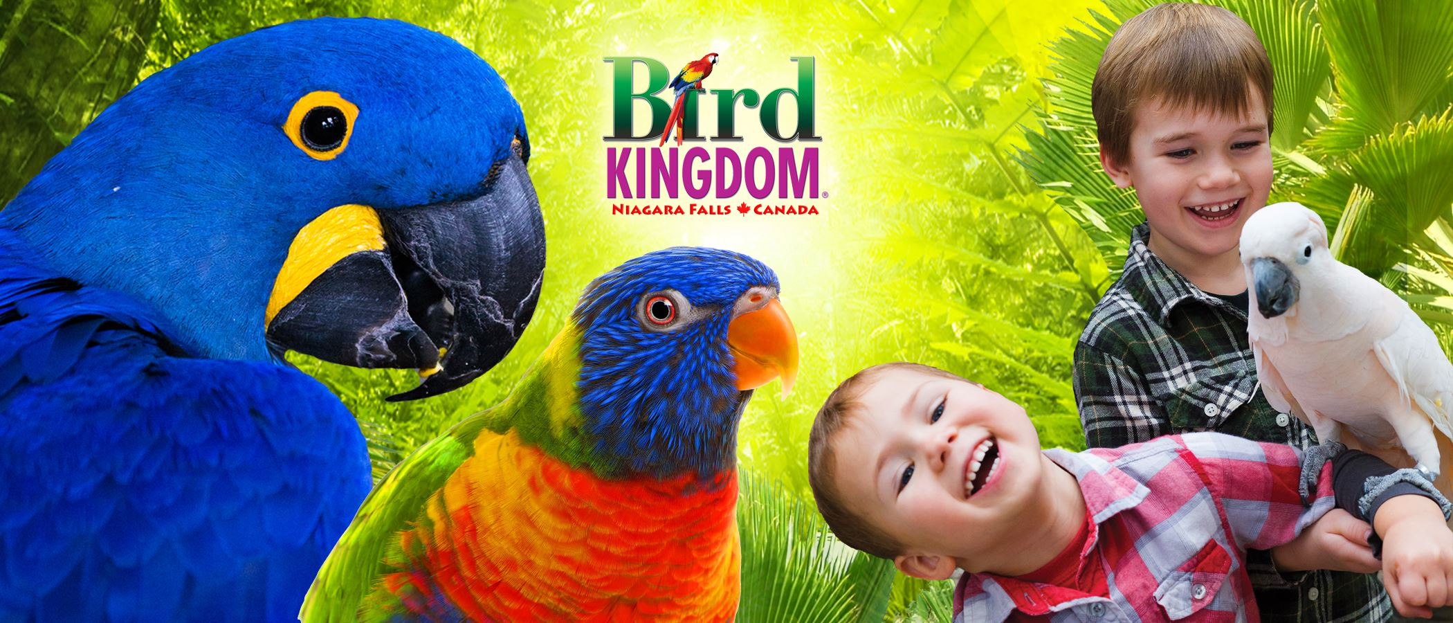 Bird Kingdon - Meet the Birds