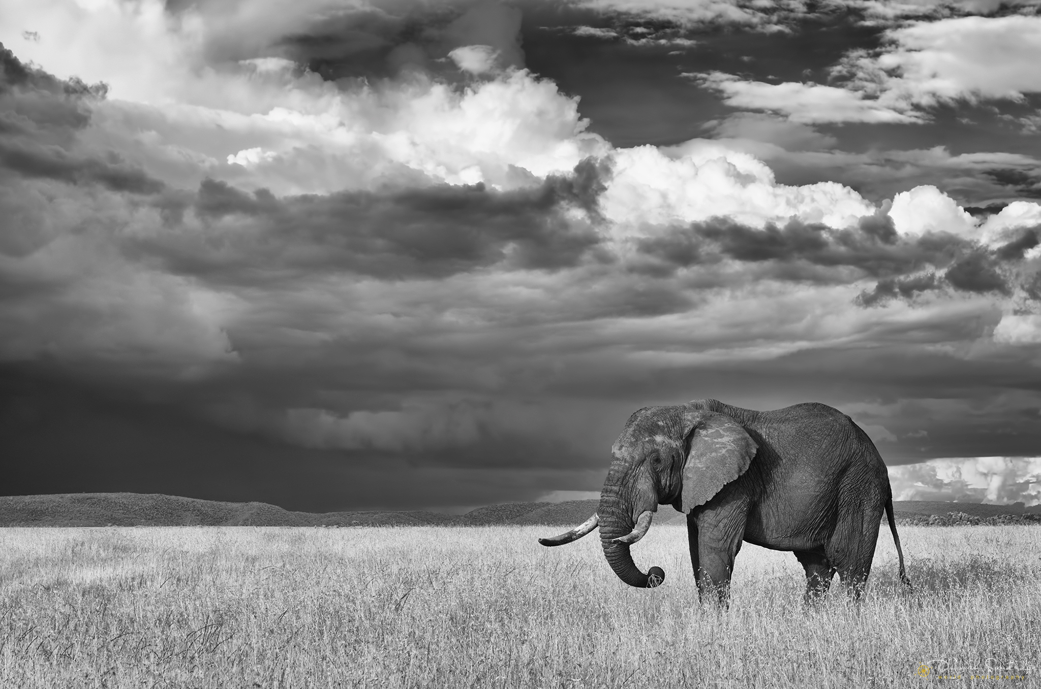 Infrared elephant Serengeti.jpg