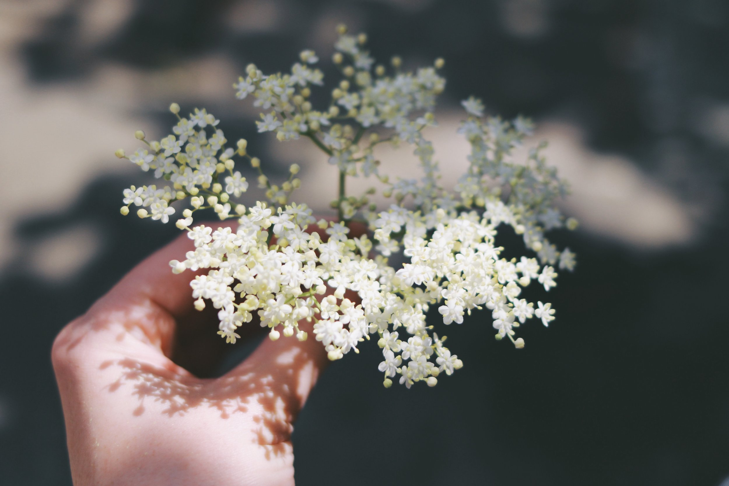 Elderflowers have a delicately floral flavour which pairs beautifully with lemon.