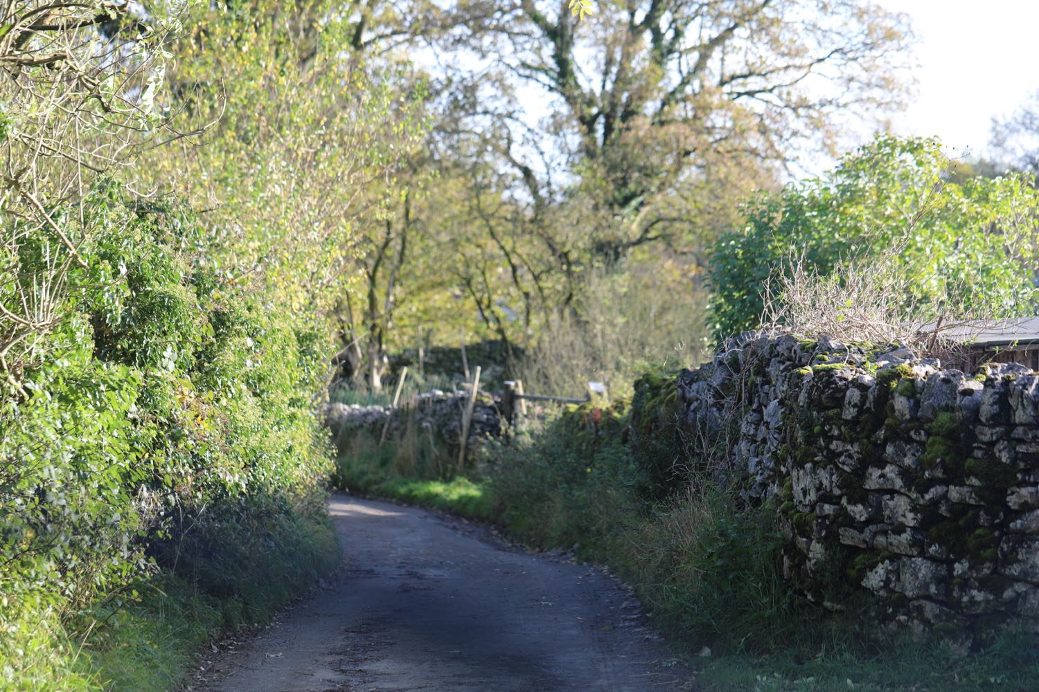 Country Lane Near Charlie Whinney Workshop