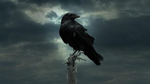 raven-513x289.jpg