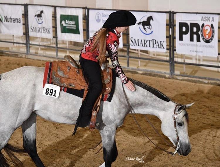 KB Performance Horses