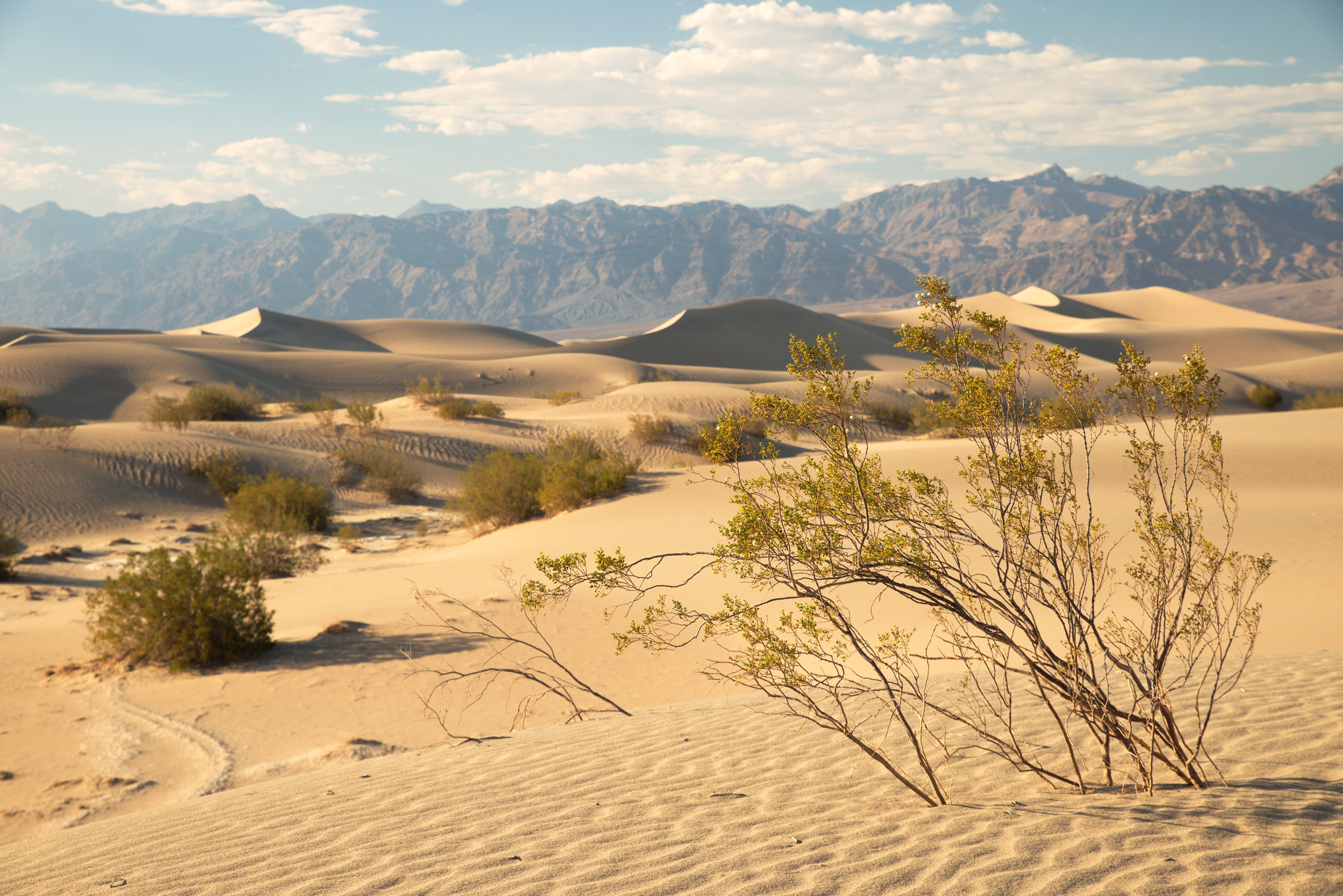 20170622_30_Trip_Death_Valley_Sand_Dunes_010.jpg