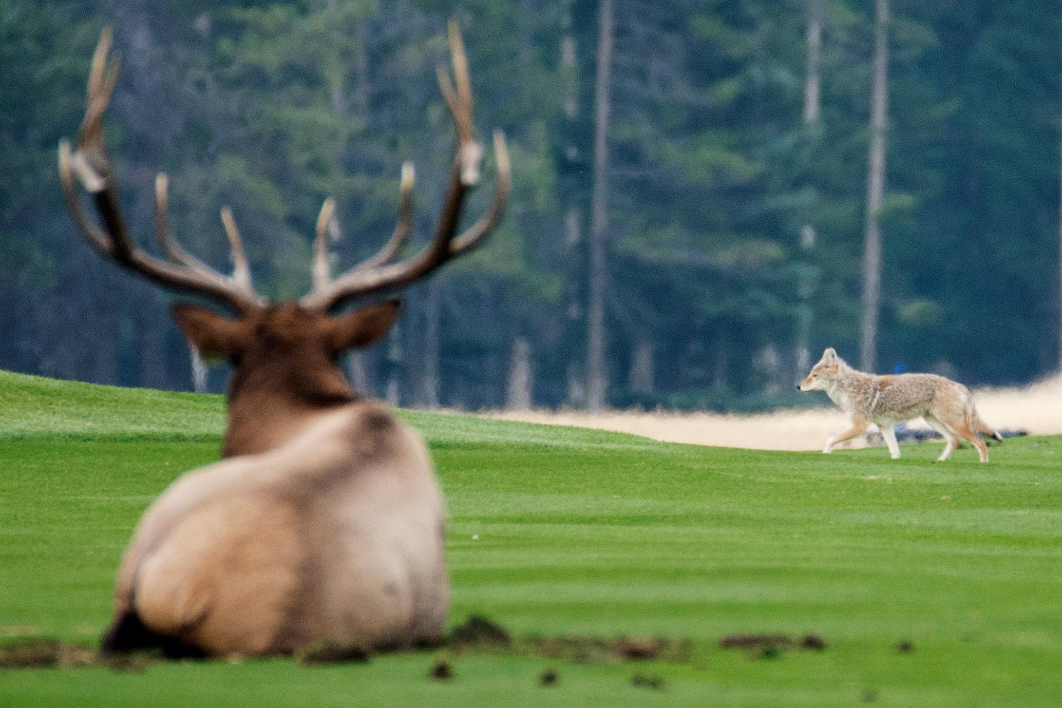20170917_Banff_Springs_Dinner_Golf_Elk_052_s.jpg