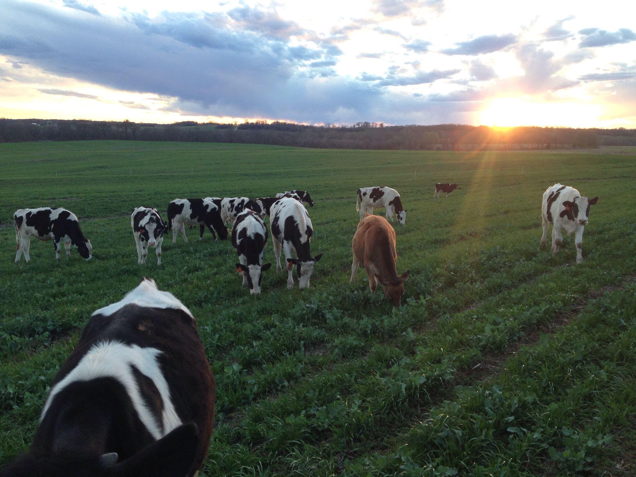 Cover Crop Ranch -