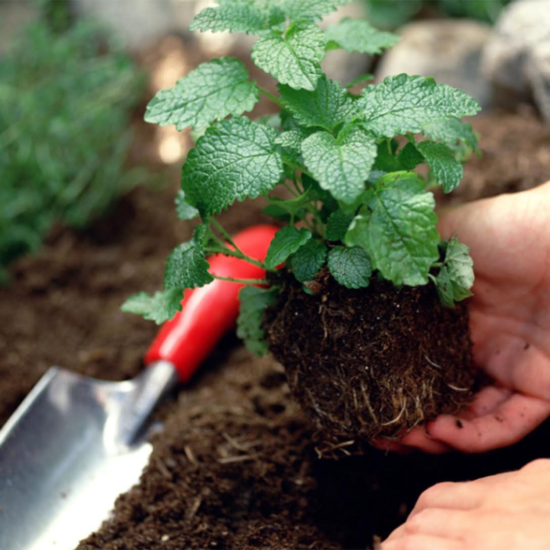 gardencropped.jpg