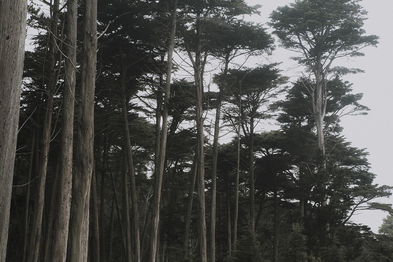 sutro-forest.jpg