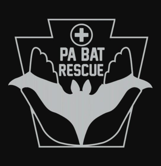 100% of the profit from our sales goes to PA Bat Rescue - https://pabatrescue.org/