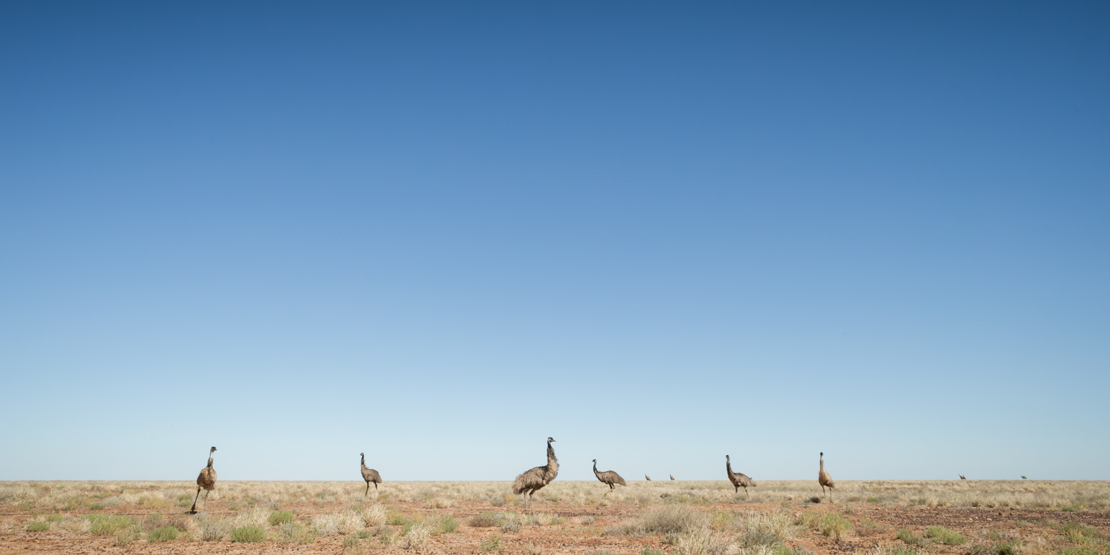 Emuscape_David Stowe-1544-2.jpg