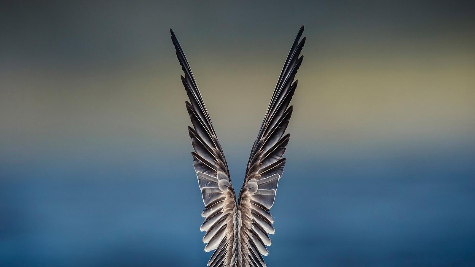 DStowe_9_Feathered Symmetry.jpg