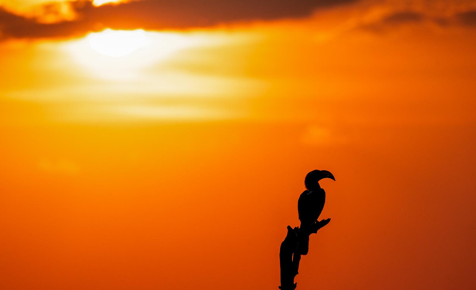Hornbill-012.jpg
