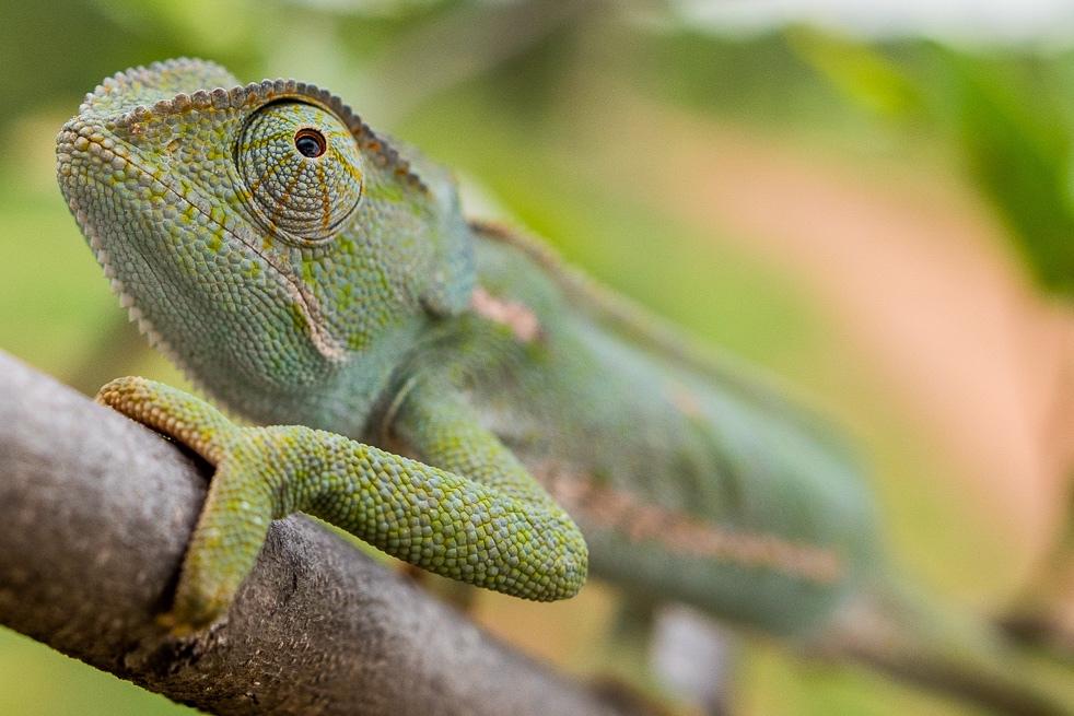 Chameleon-016.jpg