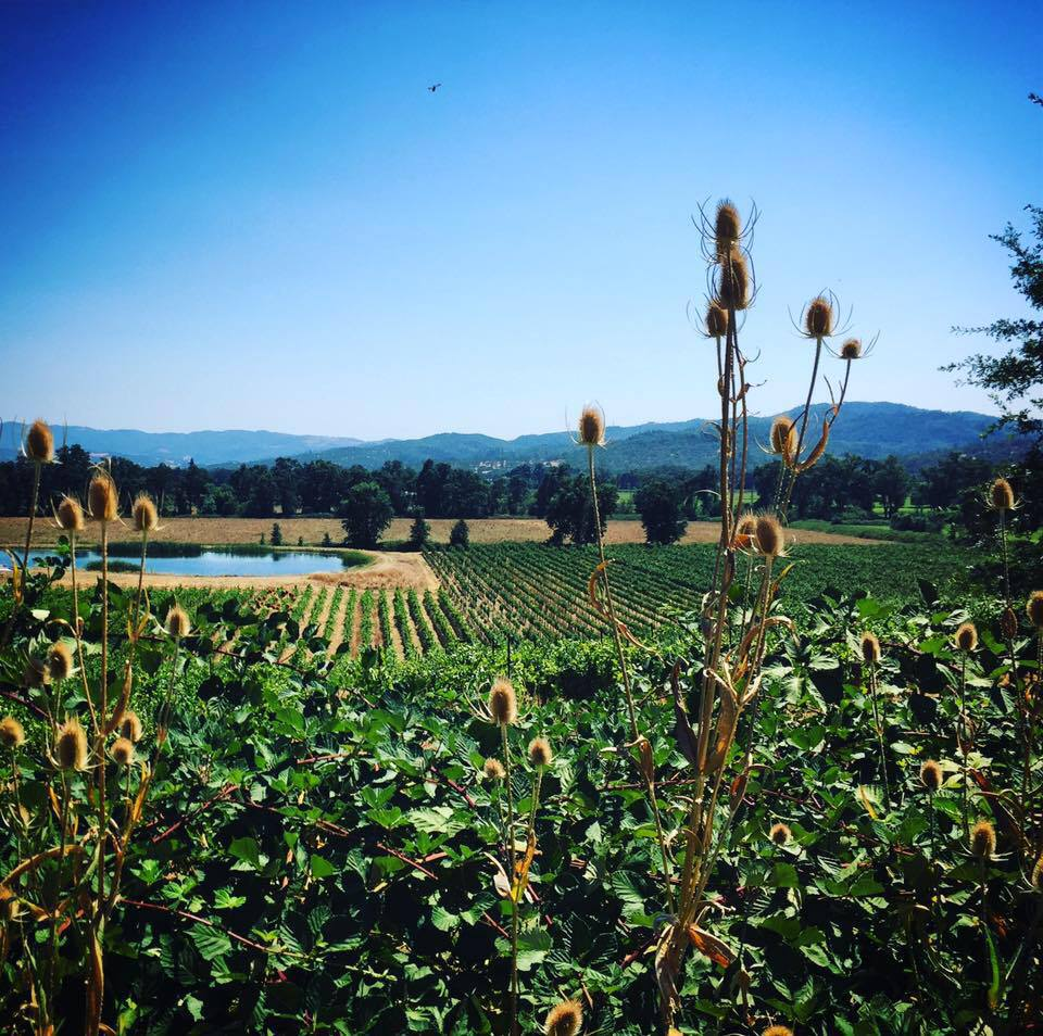 Vecino Vineyards  - Potter Valley, MendocinoPotter Valley is known for hot days and cold nights and is the most northerly AVA within the North Coast viticultural area. The valley runs northwest and is about eight miles long and two miles wide. It is the northernmost valley in the Russian River watershed. The Eel river also runs through the region. Vecino Vineyard is managed organically and biodynamically and is one of the most beautiful places we've ever seen!