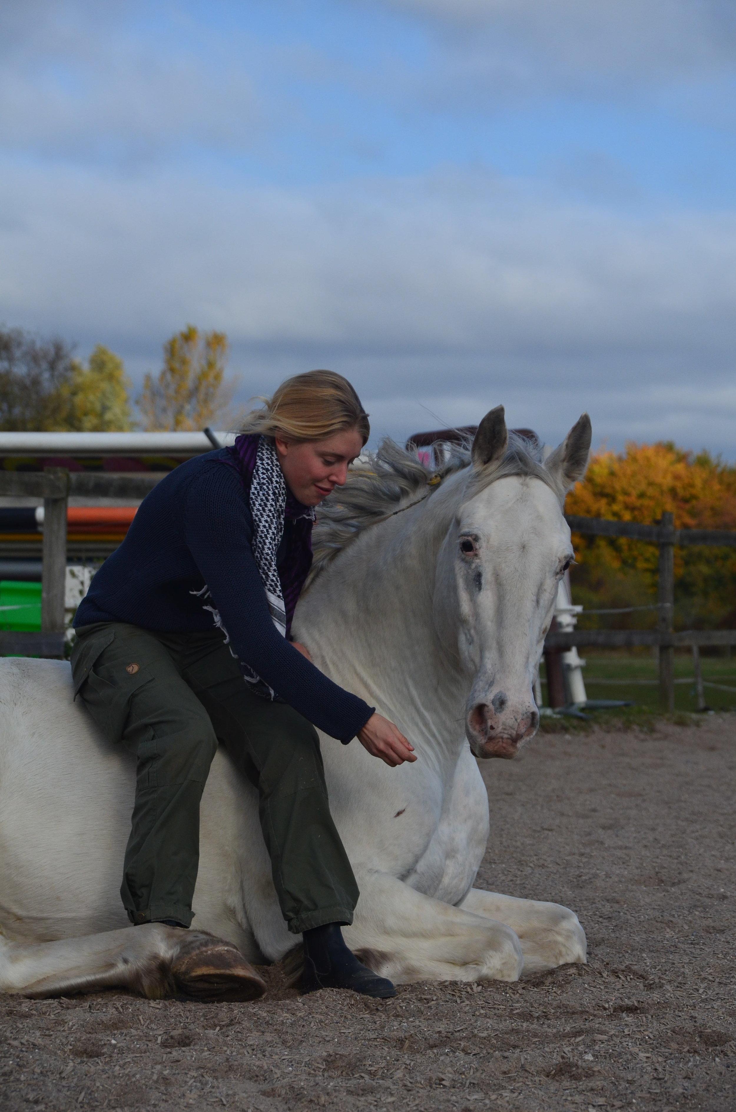 Heste i træning - Min træning er vidensbaseret og mit fokus er på hestens indlæring, biomekanik og fysiske formåen. Jeg fokuserer på at skabe gode positive associationer for hesten til arbejdet, samt at skabe gode og stabile basissignaler. Al træning bliver udført i et tempo, så hesten kan følge med fysisk og mentalt.Jeg tager alle typer af heste i træning. Det vigtigste for mig før træningen er en god og åben kommunikation med ejer og en grundig forventningsafstemning, og vi lægger sammen en plan for træningen af din hest. Hesten vil blive opstaldet på Skovly Ridecenter i Køge. Du er velkommen til at henvende dig til mig, så vi kan finde den bedste opstaldningsløsning for din hest.Prisen er fra 5000,- kr pr måned og inkluderer opstaldning.